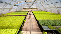 Kertészet energiaellátó-rendszerének korszerűsítése